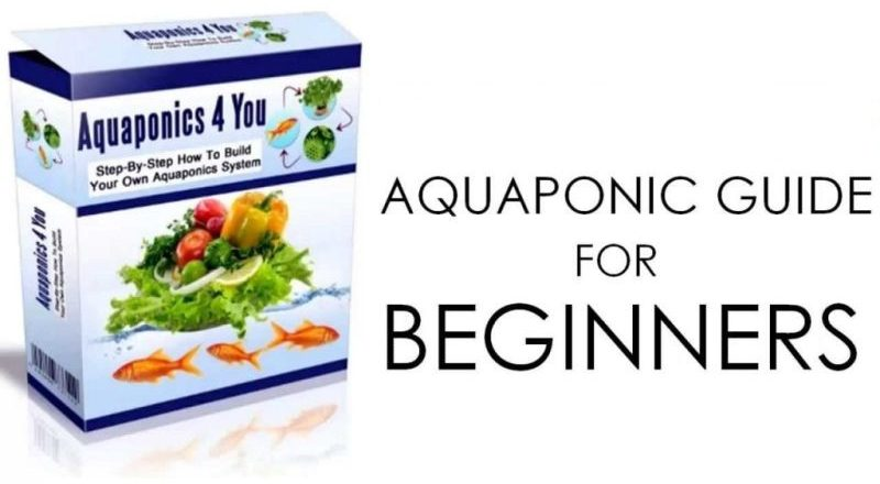 Aquaponics 4 You Review - Does John Fay's System Really Work?